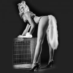Fox Tail N°13